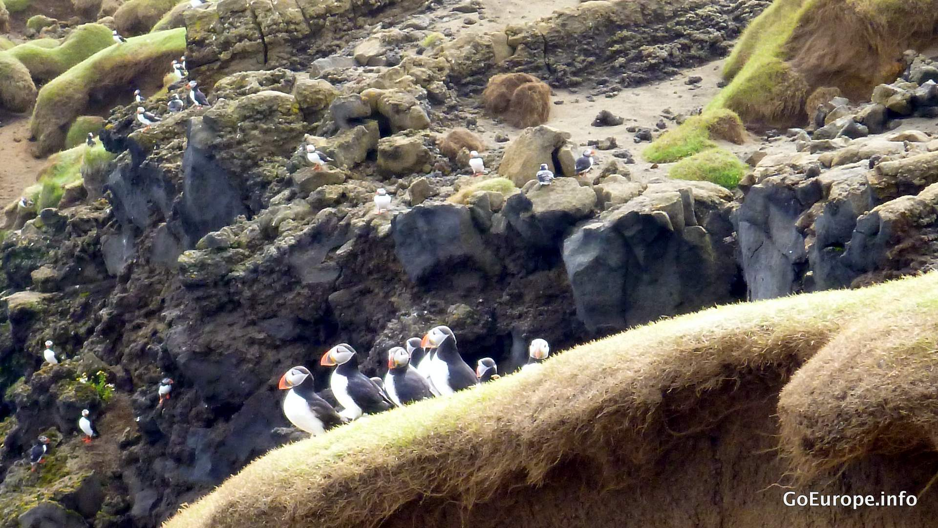 Puffins at the cliffs.